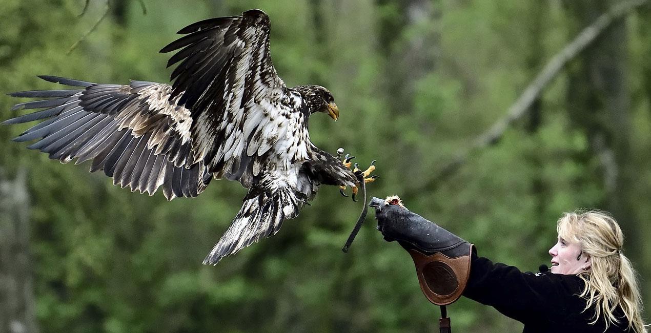 slide-roofvogelshow01
