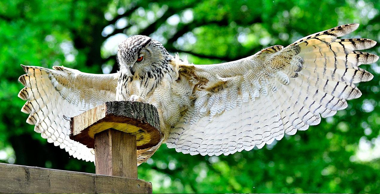 slide-roofvogelshow02